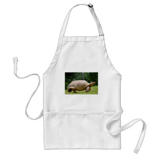 African spurred tortoise walking on grass adult apron