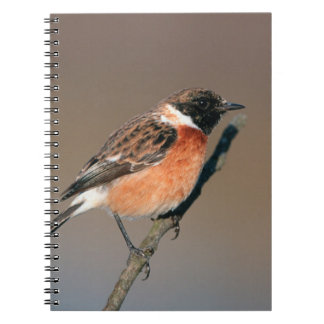 African Stonechat (Saxicola Torquata) On Twig Notebook
