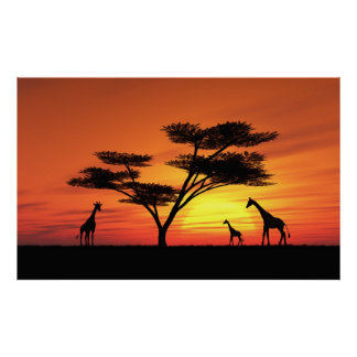 African Sunset Posters