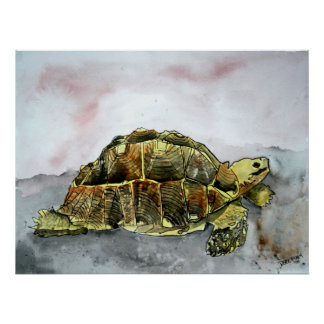 african tortoise land turtle poster print painting