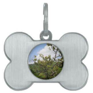 African Tree of Hope Pet Tag