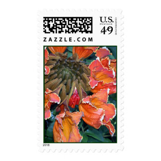 African Tulip Tree Blossom Postage