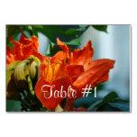 African Tulip Tree Card