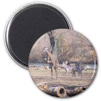 African Velt Fridge Magnets