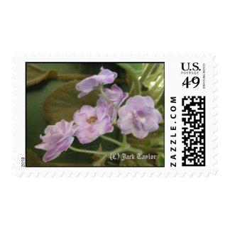 African Violet 02 Stamp