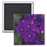 african violet 2 inch square magnet