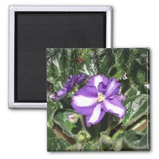 African Violet Blue/White Magnet