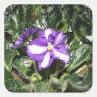 African Violet Blue/White Sticker