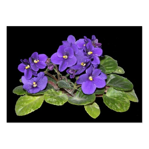 African violet business card templates