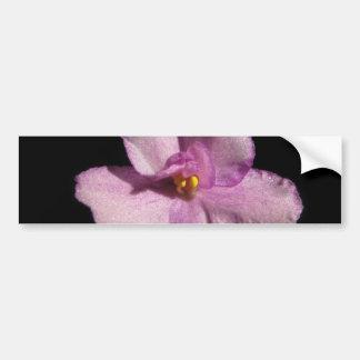 African Violet Flower Bumper Sticker