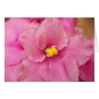 African violet flower card