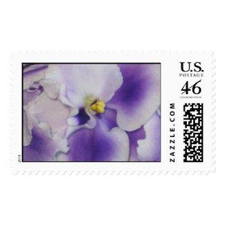 African Violet Postage