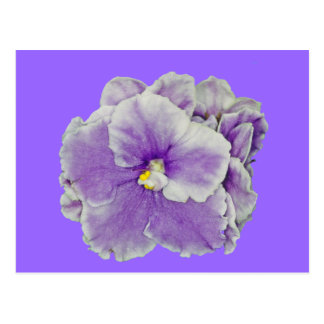 African Violet Purple Post Card