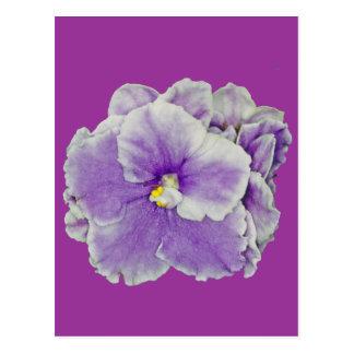 African Violet Purple Postcard