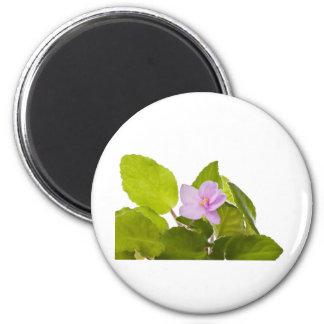african violet - saintpaulia ionantha 2 inch round magnet
