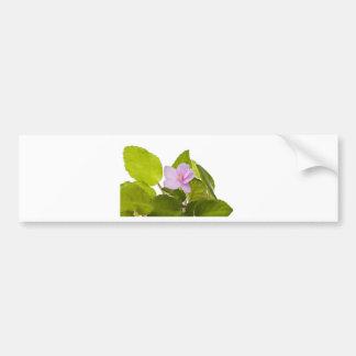 african violet - saintpaulia ionantha bumper sticker