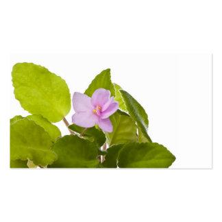african violet - saintpaulia ionantha business card