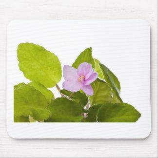 african violet - saintpaulia ionantha mouse pad