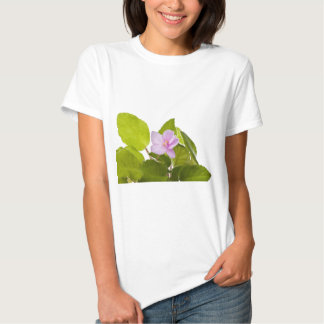 african violet - saintpaulia ionantha tee shirt