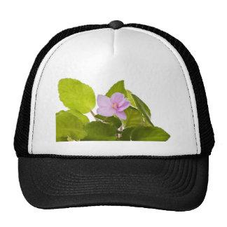 african violet - saintpaulia ionantha trucker hat