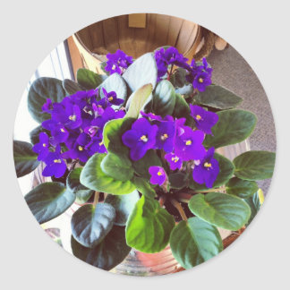 African Violet Stationery Classic Round Sticker