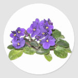 African violet stickers
