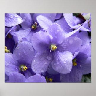 African Violets Macro Floral Print