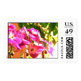 African violets postage stamps