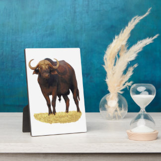 African Water Buffalo Plaque (3)sizes