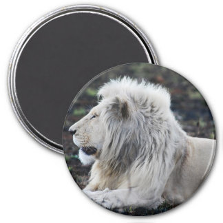 African White Lion Profile photo Magnet