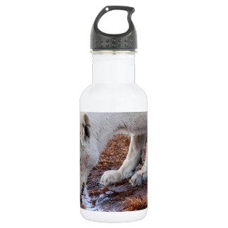 African white lion reflection 18oz water bottle