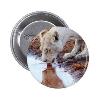 African white lion reflection 2 inch round button