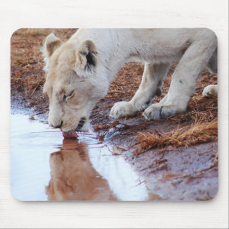 African White Lion Reflection Mouse Pad