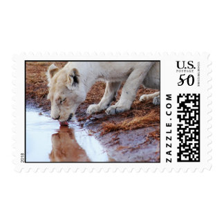African White Lion Reflection Postage