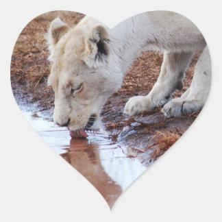 African white lion reflection heart sticker