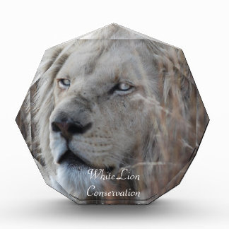 African white lion resting acrylic award