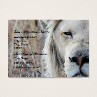 African white lion resting business card