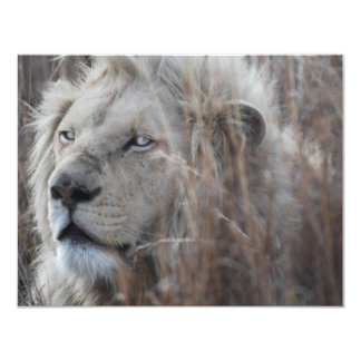 African white lion resting card