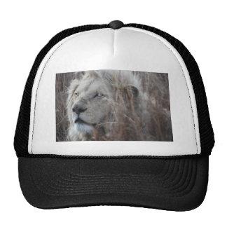 African white lion resting trucker hat