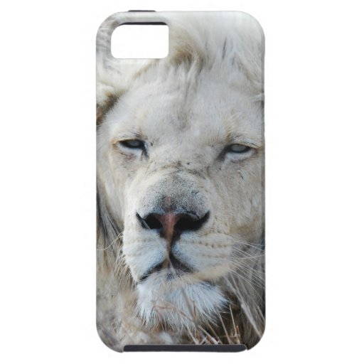 African white lion resting iPhone 5 cover