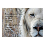 African white lion resting large business card
