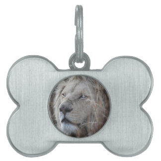 African white lion resting pet ID tags