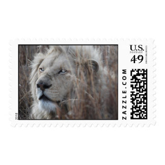 African white lion resting postage