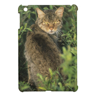 African Wild Cat, Felis libyca), ancestor of Cover For The iPad Mini