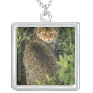 African Wild Cat, Felis libyca), ancestor of Silver Plated Necklace