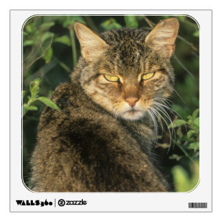African Wild Cat, Felis libyca), ancestor of Wall Sticker