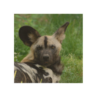 african-wild-dog9.jpg impresiones en madera