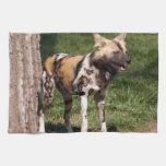african-wild-dog-001 towels