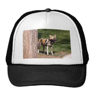 african-wild-dog-001 trucker hat