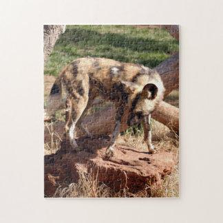 african-wild-dog-002 puzzle con fotos